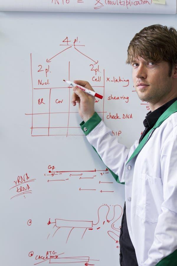 Jeune étudiant bel de Biotech avec le whiteboard photographie stock