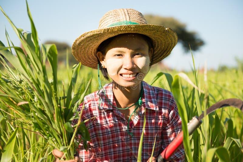 Jeune agriculteur féminin birman asiatique traditionnel image stock