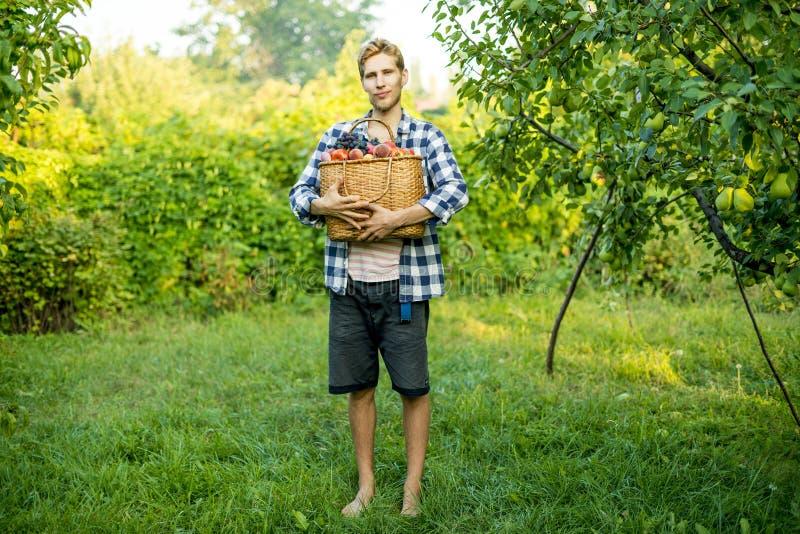 Jeune agriculteur masculin tenant un panier avec les fruits et légumes rassemblés de récolte dans une ferme de jardin photos libres de droits