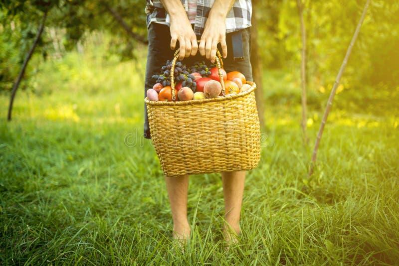 Jeune agriculteur masculin tenant un panier avec les fruits et légumes rassemblés de récolte dans une ferme de jardin photographie stock