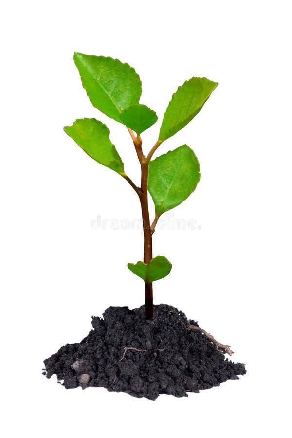 Jeune arbre images libres de droits
