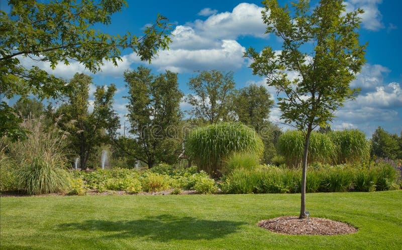 Jeune arbre dans un jardin formel photographie stock libre de droits