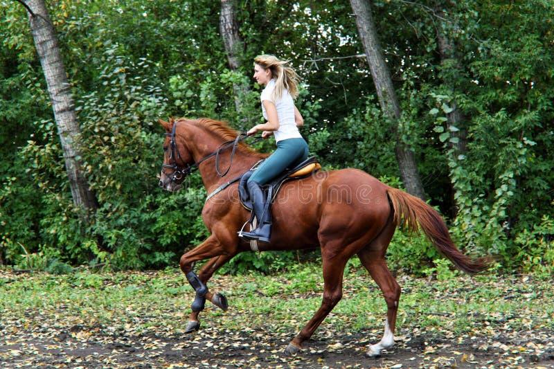 Jeune belle fille de pays avec le cheval photographie stock