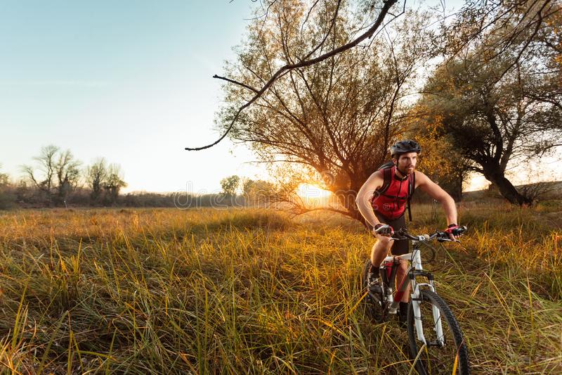 Jeune bicyclette masculine convenable d'équitation de cycliste de montagne au-dessus d'un pré avec l'herbe grande photos stock