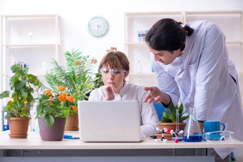 Jeune botaniste deux travaillant dans le laboratoire photo stock