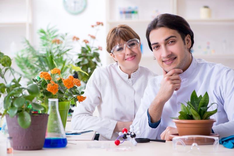 Jeune botaniste deux travaillant dans le laboratoire image stock