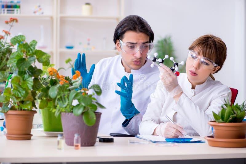 Jeune botaniste deux travaillant dans le laboratoire photographie stock