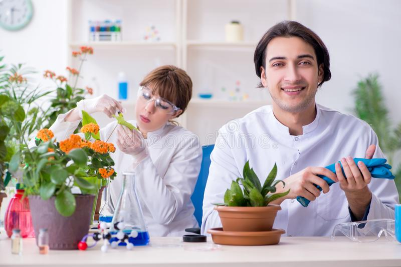 Jeune botaniste deux travaillant dans le laboratoire images libres de droits
