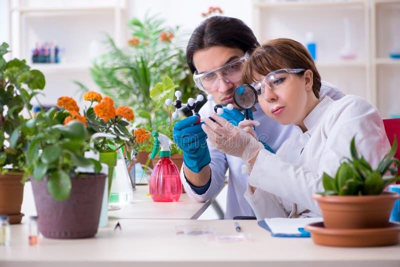 Jeune botaniste deux travaillant dans le laboratoire photo libre de droits