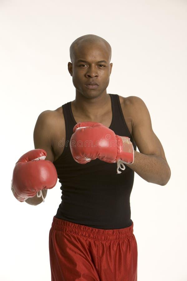 Jeune boxeur image stock