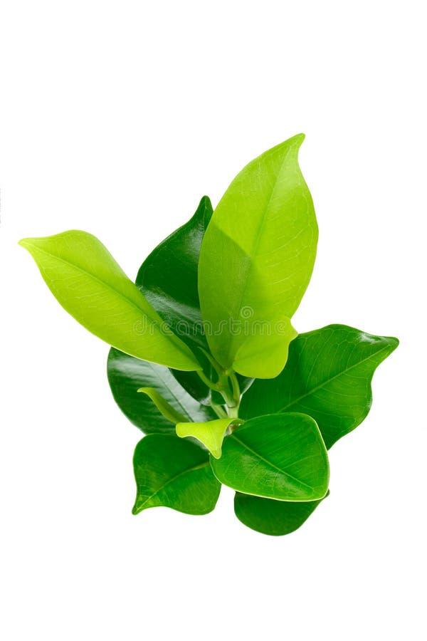 Jeune centrale verte photo stock