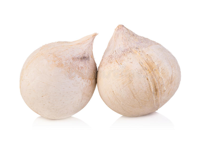 jeune chair de noix de coco sur le fond blanc photos stock