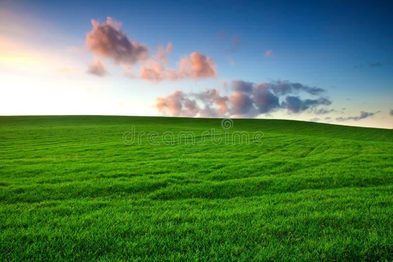Jeune champ vert photo libre de droits