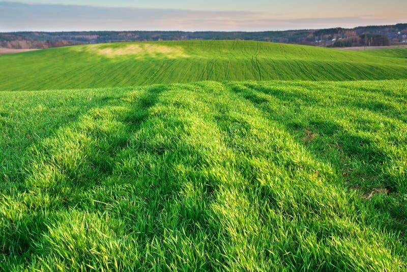 Jeune champ vert image libre de droits