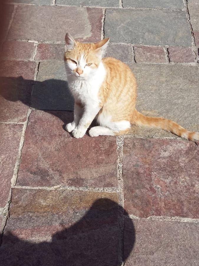 Jeune chat photos stock