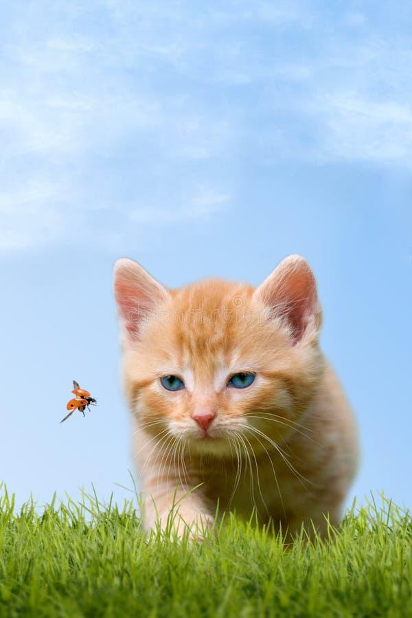 Jeune chat avec la coccinelle sur un champ vert image stock