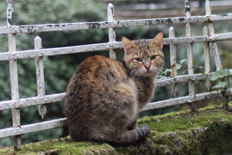 Jeune chat calme regardant fixement l'appareil-photo images stock