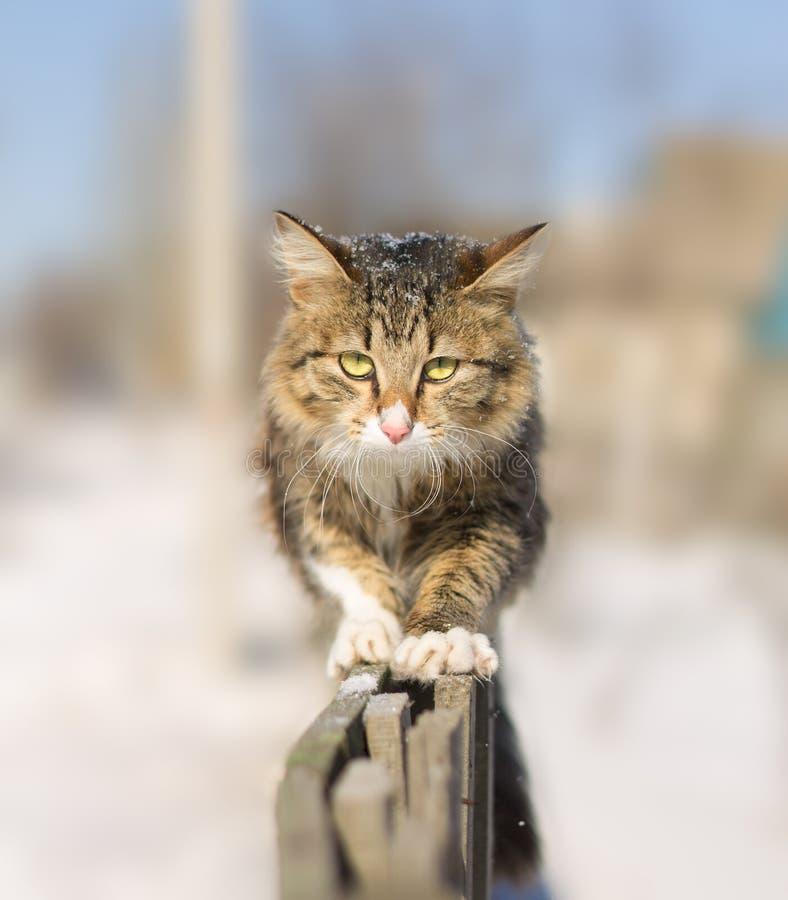 Jeune chat découragé allant sur une barrière photos stock