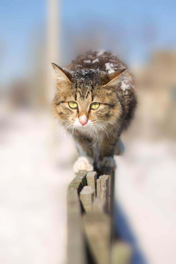 Jeune chat découragé allant sur une barrière en hiver photo libre de droits