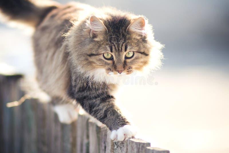 Jeune chat découragé allant sur une barrière en hiver images stock
