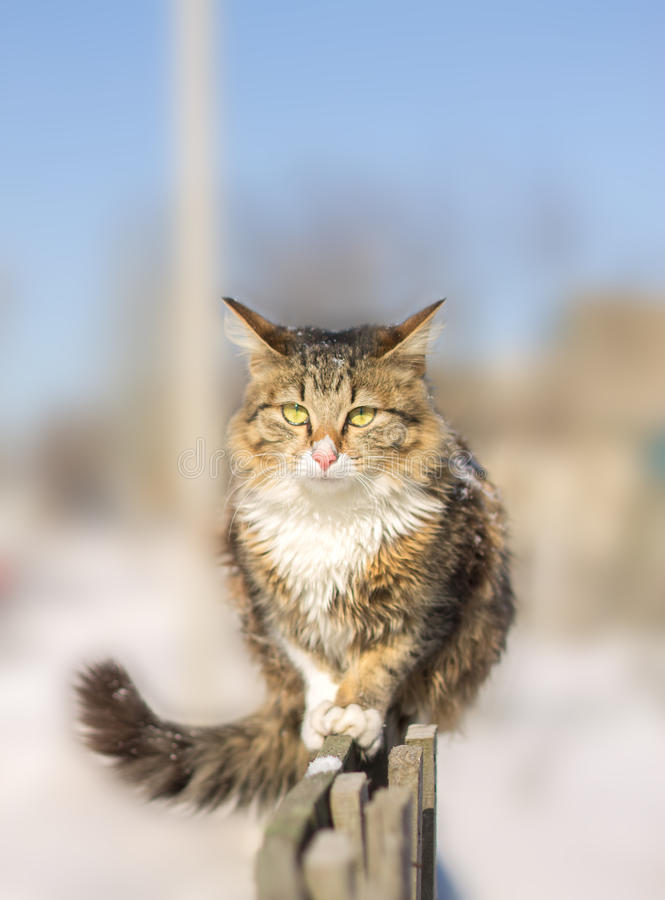 Jeune chat découragé sur une barrière en hiver images libres de droits