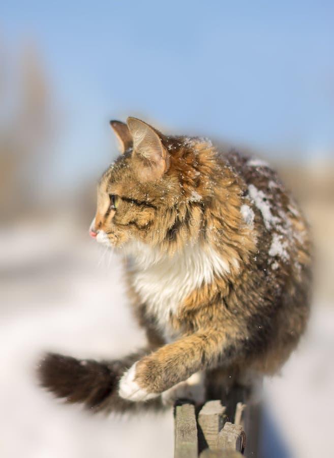Jeune chat découragé sur une barrière en hiver image libre de droits