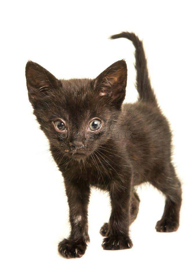 Jeune chat noir avec la maladie de éternuement photos libres de droits
