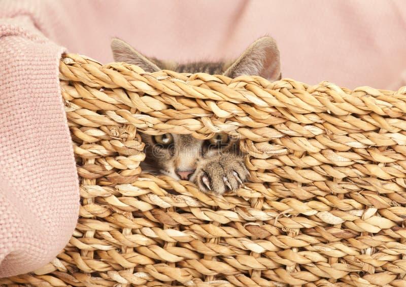 Jeune chat regardant hors du panier photographie stock libre de droits