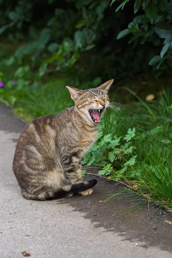 Jeune chat-tabby gris brandissant de larges bâtons images libres de droits