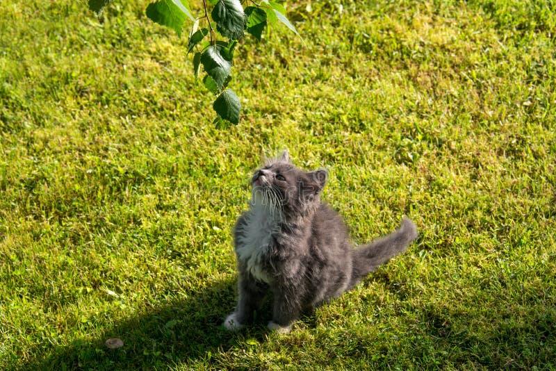 Jeune chaton mignon photos libres de droits