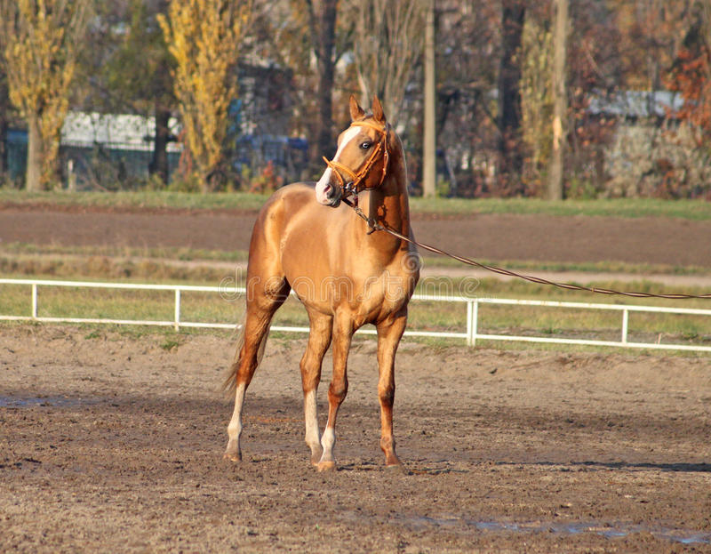 Jeune cheval images stock