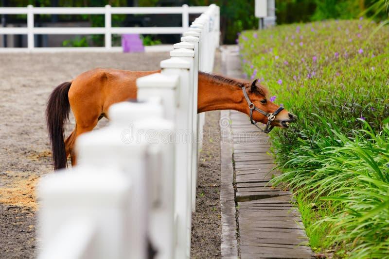 Jeune cheval drôle mangeant des fleurs par la barrière photos stock
