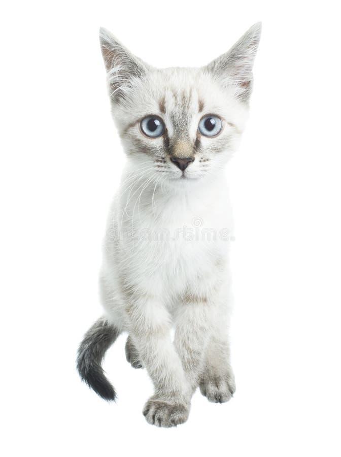 Jeune course de chat photographie stock