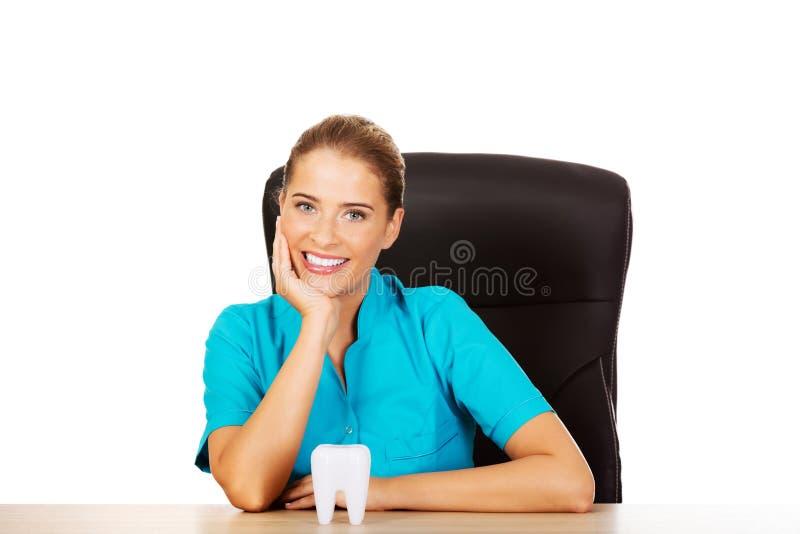 Jeune dentiste féminin tenant le modèle de dent et s'asseyant derrière le bureau photographie stock