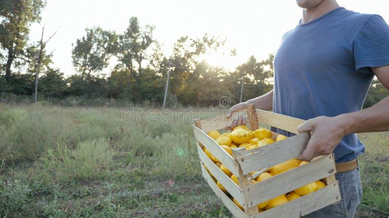 Jeune exploitant agricole allant sur le champ avec la boîte en bois du potiron organique de buisson photo libre de droits