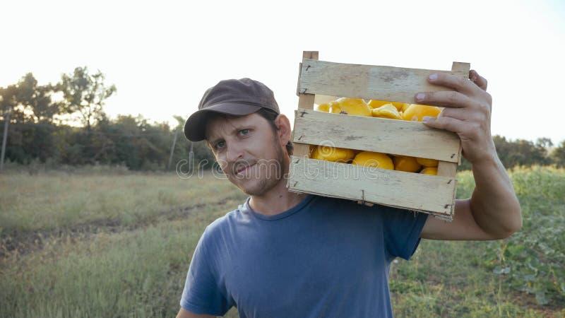 Jeune exploitant agricole allant sur le champ avec la boîte en bois du potiron organique de buisson images libres de droits