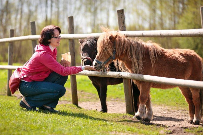 Jeune femme attirante alimentant deux poneys photo libre de droits
