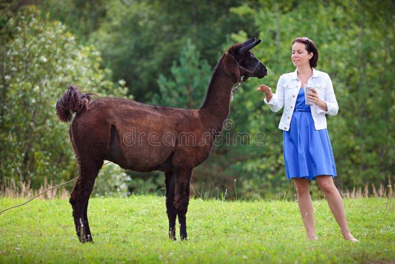 Jeune femme attirante alimentant un lama brun photo libre de droits