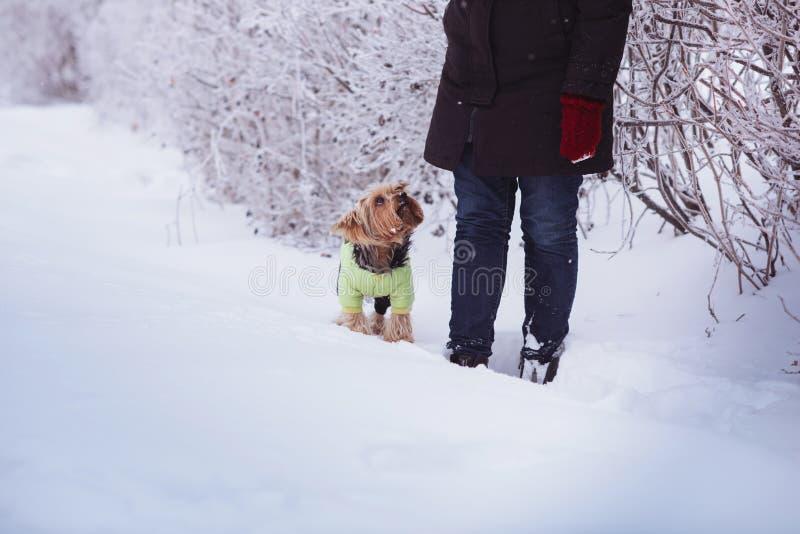 Jeune femme attirante ayant l'amusement dehors dans la neige avec son chien Yorkshire Terrier photos libres de droits