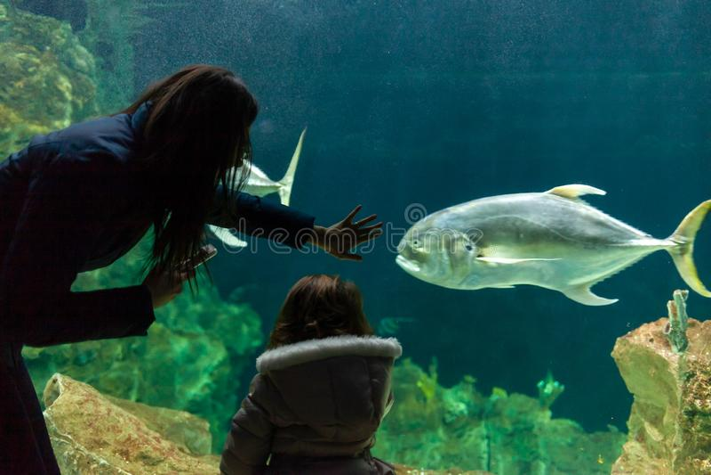Jeune femme avec la montre d'enfant un poisson dans l'aquarium image stock