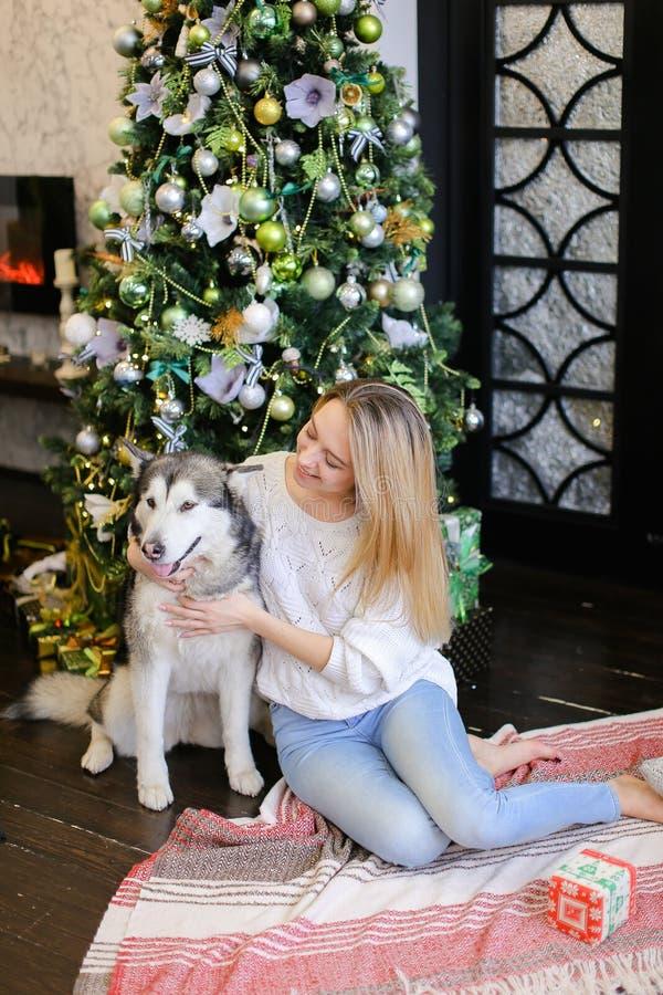 Jeune femme blonde avec le malamute se reposant près de l'arbre de Noël image libre de droits
