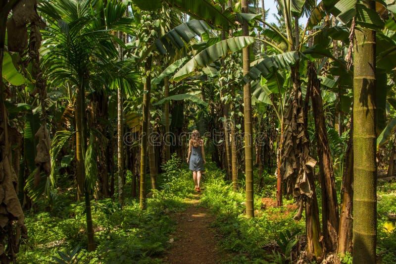 Jeune femme dans la jungle dans la plantation tropicale d'épice, Goa, Ind photos stock