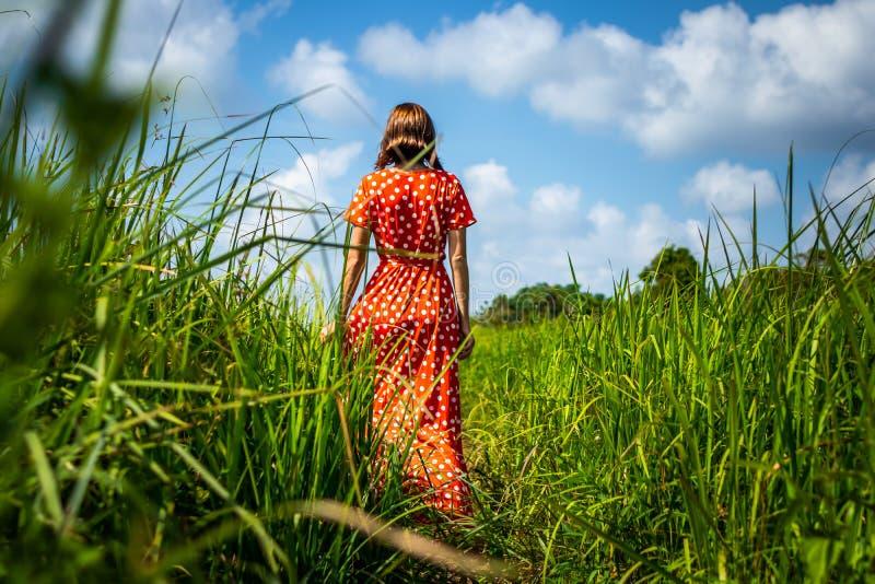 Jeune femme dans la robe rouge marchant sur une traînée avec la longue herbe verte Île de Bali images libres de droits