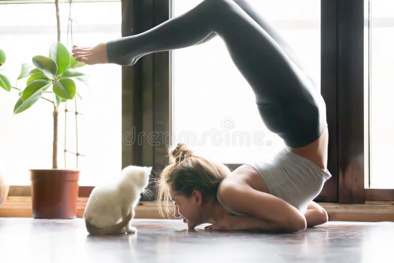 Jeune femme dans la variation de la pose de vrischikasana, maison, chat près photographie stock libre de droits