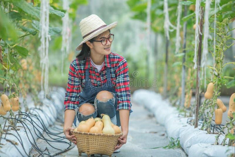 Jeune femme en serre chaude avec la moisson de courge de butternut photos stock