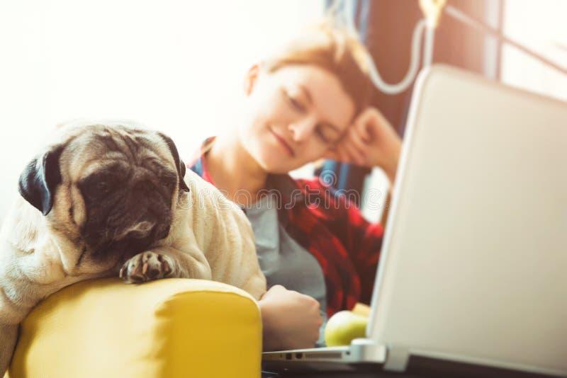 Jeune femme et chien avec l'ordinateur portable Travail à la maison Roquet photos libres de droits