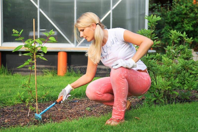 Jeune femme faisant du jardinage en sa cour avec des râteaux photographie stock