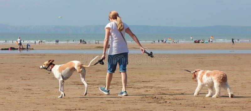 Jeune femme marchant deux chiens plage en août 2018 photographie stock libre de droits