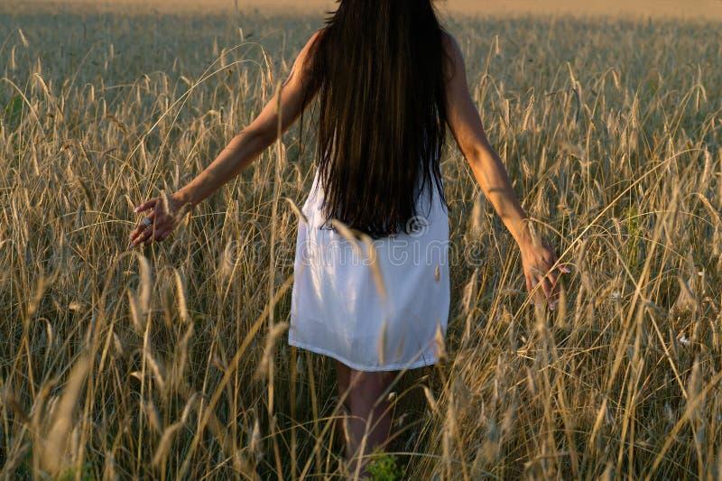 Jeune femme marchant sur le champ du seigle dans le coucher du soleil image stock