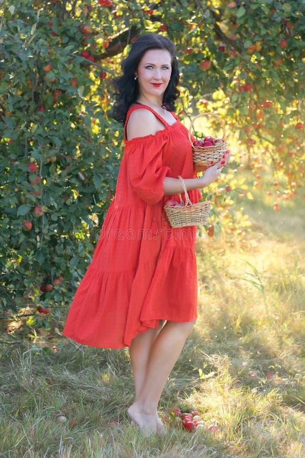 Jeune femme moissonnant des pommes image stock
